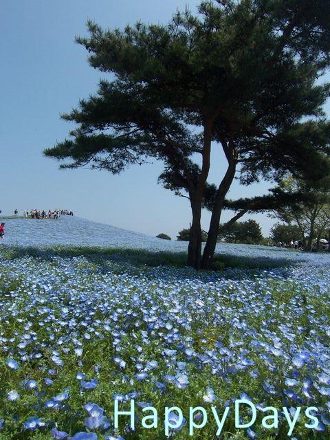 海浜公園7