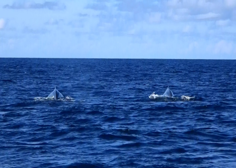 沖縄 ホエールウォッチング