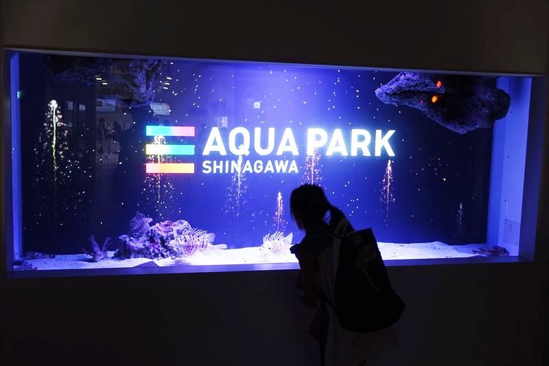 アクアパーク品川 イルカのショー