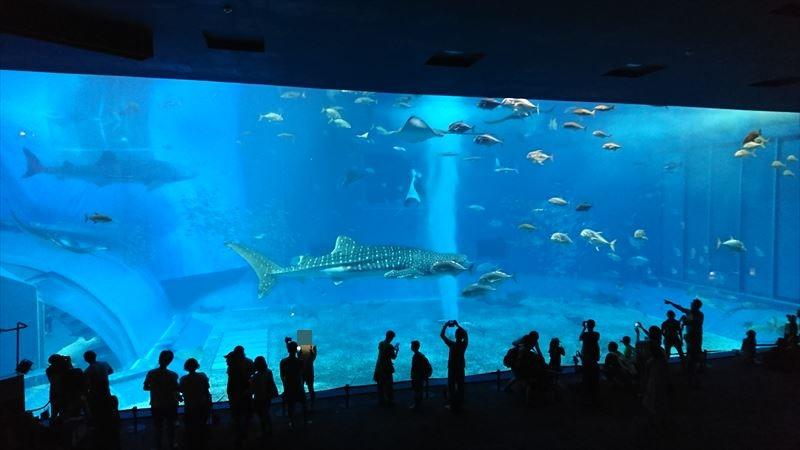 沖縄旅行 美ら海水族館 イルカショー