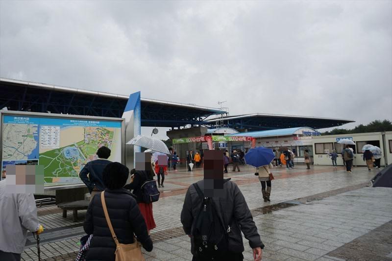 ひたち海浜公園 ネモフィラ 混雑