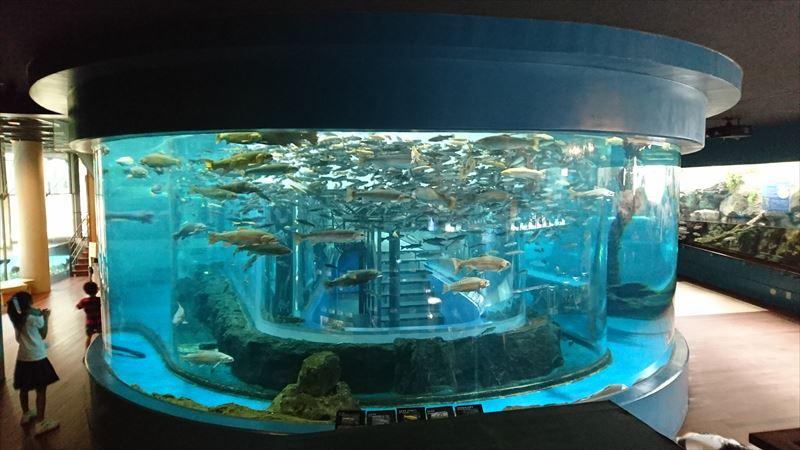 湧水の里水族館 口コミ 駐車場